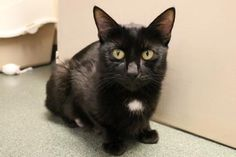 Mrs. Howell has been adopted from Seattle Humane http://www.seattlehumane.org/adoption/cats