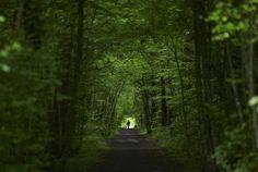 La salida de las hojas de los árboles caducifolios se ha anticipado siete días desde 1980