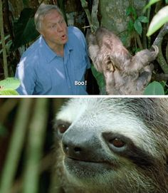 Funny Animal Pictures - View our collection of cute and funny pet videos and pics. New funny animal pictures and videos submitted daily. Pictures Of Sloths, Funny Animal Pictures, Funny Images, Cute Pictures, Baby Images, Funny Gifs, Funny Facts, Cute Animal Memes, Funny Animals