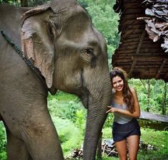 Volunteer in Elephant Sanctuary, Chiang Mai, Thailand Photo Elephant, Elephant Love, Adventure Awaits, Adventure Travel, Thailand Adventure, Oh The Places You'll Go, Places To Visit, The Jungle Book, Photo Voyage