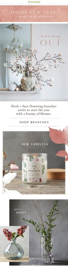 Blooming winter #branches at #shopterrain January 1