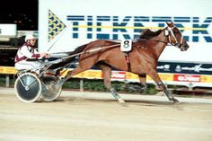 The great Lyell Creek - one of New Zealand's best trotters. Australasian Grand Circuit Trotters Series winner in 2000, 2001 and 2005.