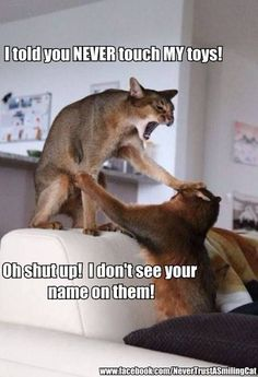 Haha funny cats :D those cats look like miniature cougars!!