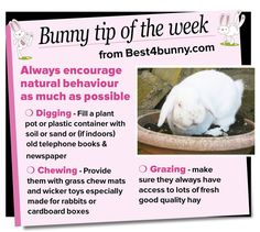 Bunny tip of the week - encourage natural behaviour
