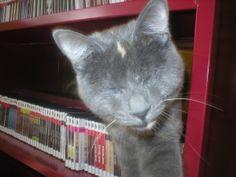 Nyx the CCPL eyeless library cat