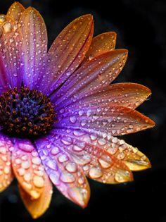 rainbow flower for a tattoo Flower Painting Canvas, Oil Painting Flowers, Flower Canvas, Exotic Flowers, Amazing Flowers, Beautiful Flowers, My Flower, Flower Art, Flower Power
