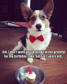 Funny Animal Pictures Of The Day & 21 Pics Funny Animal Memes, Dog Memes, Funny Animal Pictures, Dog Pictures, Funny Dogs, Funny Animals, Cute Animals, Puppies And Kitties, Cute Puppies