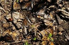Google Image Result for http://www.wishfish.org/wp-content/09_dead-butterflies.jpg