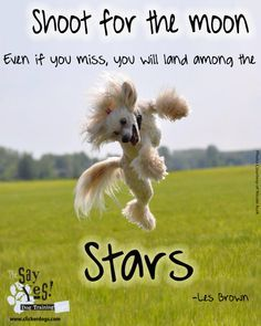 ❤️Hit That Share Button To Motivate Your Friends & Family❤️ ▬▬▬▬▬▬▬▬▬▬▬▬▬▬▬▬▬▬▬ #MondayMotivation #MotivationMonday #quotes #quoteoftheday #motivationalquotes #PuppyLove #PawPrints #Happiness #LancasterPuppies www.LancasterPuppies.com Puppy Quotes, Lancaster Puppies, Les Brown, Brown Dog, Puppies For Sale, Monday Motivation, Friends Family, Dog Training, Puppy Love