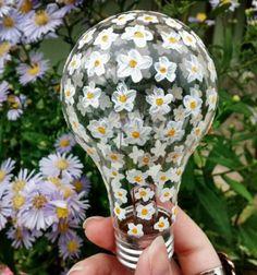 ✧ [Aesthetic] #flowers #daisy