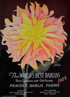 The world's best dahlias /. Dahlialand, N.J. :The Nursery.. biodiversitylibrary.org/page/46343260