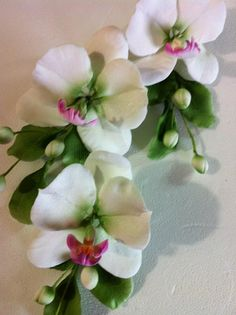 Orquídeas phalaenopsis by Rosa Aquino