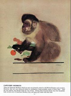 Bear Alley: Maurice Wilson - Monkeys, Apes and Lemurs Old World, Lemurs, Bear, Monkeys, Shadows, Artist, Animals, Illustrations, Rompers