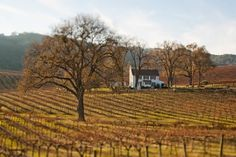 Google Image Result for http://wineryweddingguide.com/images/Hammersky.jpg