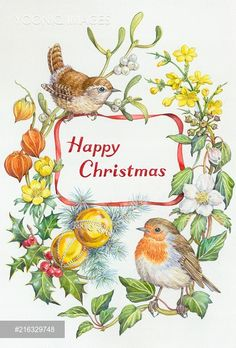 Happy Christmas – Wren, robin, mistletoe etc