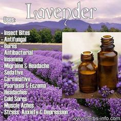 Incredible effective uses of Lavender | Myhealthytricks.com