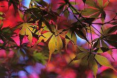 ~~ Autumn Colours ~~