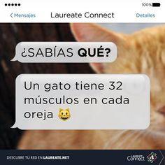 ¿Para qué crees que sirvan estos músculos?  #DatoInteresante #Laureate #Gatos