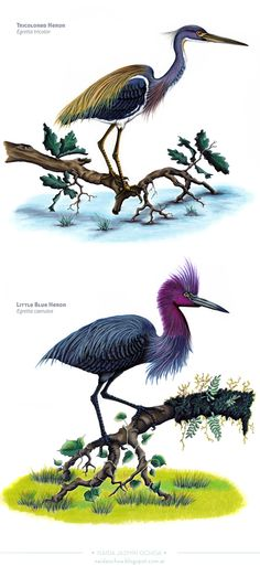Birds Illustrations by Naida Jazmín Ochoa, via Behance
