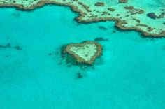 Un immense récif corallien se cache sous la Grande Barrière de corail ! | Daily…