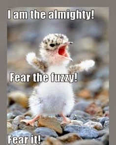 funny animals with sayings - Google Search