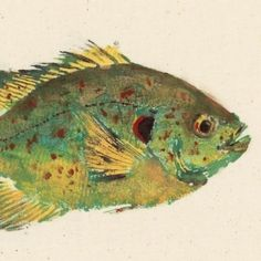 Shellcracker  Gyotaku Fish Rubbing  Limited Edition by fredfisher, $35.00