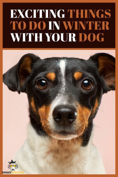 Exciting things to do in winter with your dog Relaxed Dog, Essential Oils Dogs, Dog Anxiety, Dog Safety, Dog Runs, Mixed Breed, Happy Dogs, Anxious, Zero Waste