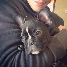 Teen Wolf - Charlie Carver's dog - OMG it's Gus! I love Gus! ❤ He's so cute (they both are) Charlie Carver, Werewolf, Teen Wolf, French Bulldog, Fandoms, Pets, Animals, Life, Animales