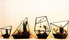 Terrariums from Assembly