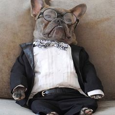 """Tired""..... ""just tired"", French Bulldog in Black Tie, Tuxedo, Bow Tie ❤️"