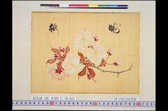 National Diet Library: Cherry blossom paintings by Edo period botanist Konen Sakamoto,1842 / 『桜花譜』坂本浩然 筆