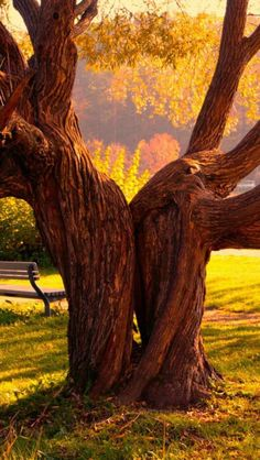 Landscape, Park, Tree, Yellow, Nature... A perfect sitting tree...