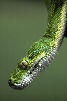 Snake (by dks_34)