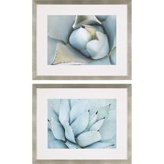 Agave Detail II By: Jerry, 27 x 33 In. Framed Art, Set of Two