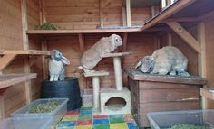 All sorts of rabbit housing idea for you to view. Great ideas, lots of fun and ways to make your bunnies' housing an attractive feature in the garden/home as well as a fantastic environment for. Bunny Sheds, Rabbit Shed, Rabbit Run, Pet Rabbit, Indoor Rabbit House, House Rabbit, Bunny Cages, Rabbit Cages, Rabbit Playground