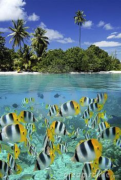 Coral Reef - Tahiti - French Polynesia by Steve Allen, via Dreamstime
