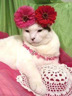 Estella is the most feminine kitty in....