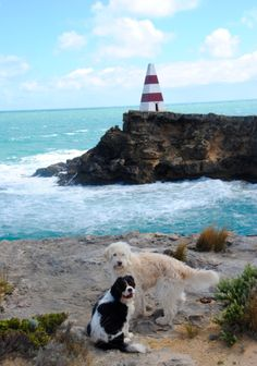 Dogs by the Sea