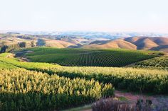 Stellenbosch is a destination you won't want to leave, so we suggest taking a piece of it with you. #travel #Stellenbosch #placestovisit