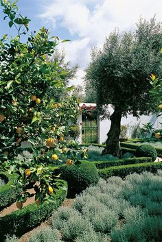 Visitors enter this walled Portugal garden through an iron gate featuring the owners' crests. Inside stand olive and four-seasons lemon trees.