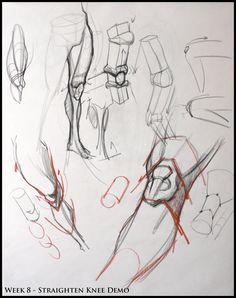 Analytical Figure Drawing SP08: Week 8 - Leg  Knee Structure Demo