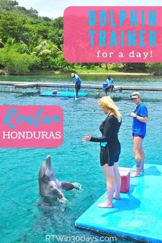 """If you're seeking a Bucket List """"dolphin experience"""" that's more special ( Best Solo Travel Destinations, Places To Travel, Dolphin Trainer, Countries In Central America, Dive Resort, Roatan, Ultimate Travel, Plan Your Trip, Travel Around The World"""