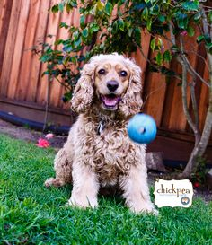 Want to join with me??? #SanfranciscoDogs #DogsofSanFrancisco #PetsofSanFranscico #SanFranciscoPets #Petphotographers #PetPhotography #Petphotos #playingball #happyday #greatweather #ClickMyPetsPictures #mydogs #doggy #lovelyday #petlovers  #puppies #greatmood #mypets #puppy #dogs #MyPetBestPet #MyPetsphoto #petphotographersineastbayarea