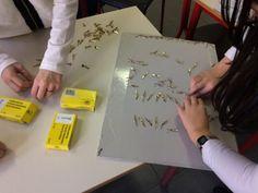 Sapientino Regioni e Capoluoghi, classe 5a - MaestraMarta Montessori, Plastic Cutting Board, Coding, Kids, Tecnologia, Italia, Art, Young Children, Boys