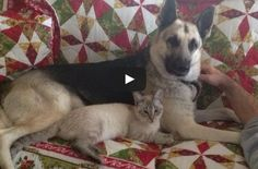 What a cute friendship between a cat and a dog! They must have a lot of fun together! #cats #dogs #BFFL