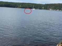 Man Jumps In Ocean To Save Stranger's Drowning Dog