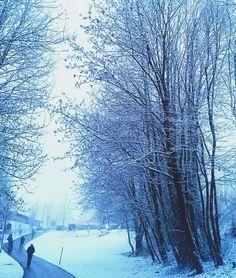 ain't no Sunshine (on such winter days)  #winter #winterwonderland #snow #tree #zima #deinbayern #089 #spooky #darkdays #nosunshine #path #instanature