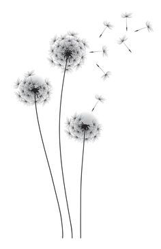 Wall Decals - Whimsical Dandelion Wall Decal You are in the right place about Wall Decals Tattoo Design And Style - Wall Tattoos, Tattoo Drawings, Body Art Tattoos, Tatoos, Dandelion Drawing, Dandelion Art, Tattoo Dandelion, Dandelion Pictures, White Dandelion