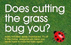 #easigrass #somerset #artificialgrass #helderberg Somerset West, Lawn Mower, Grass, Instagram Posts, Lawn Edger, Grass Cutter, Grasses, Herb