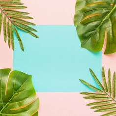 palm leaves on a pastel colorful background and a sheet of paper Free Photo